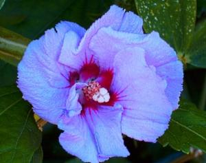 blue_flower_by_kbfstyle-d50u6g3
